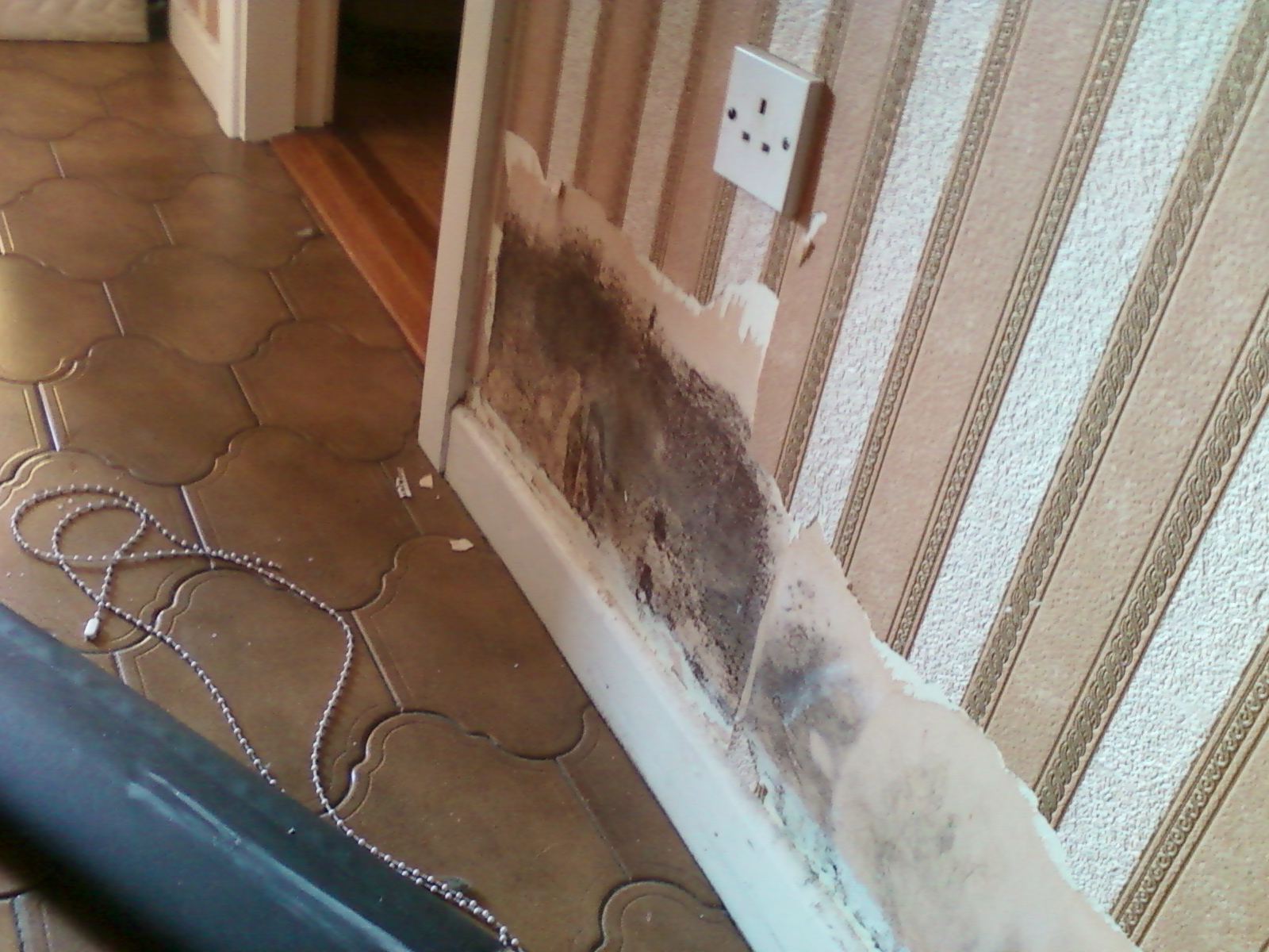 mould wall paper