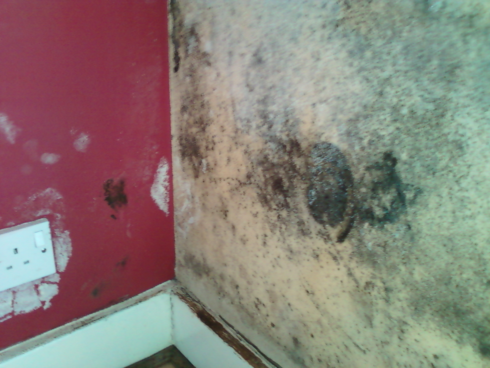 Black mould on the external wall