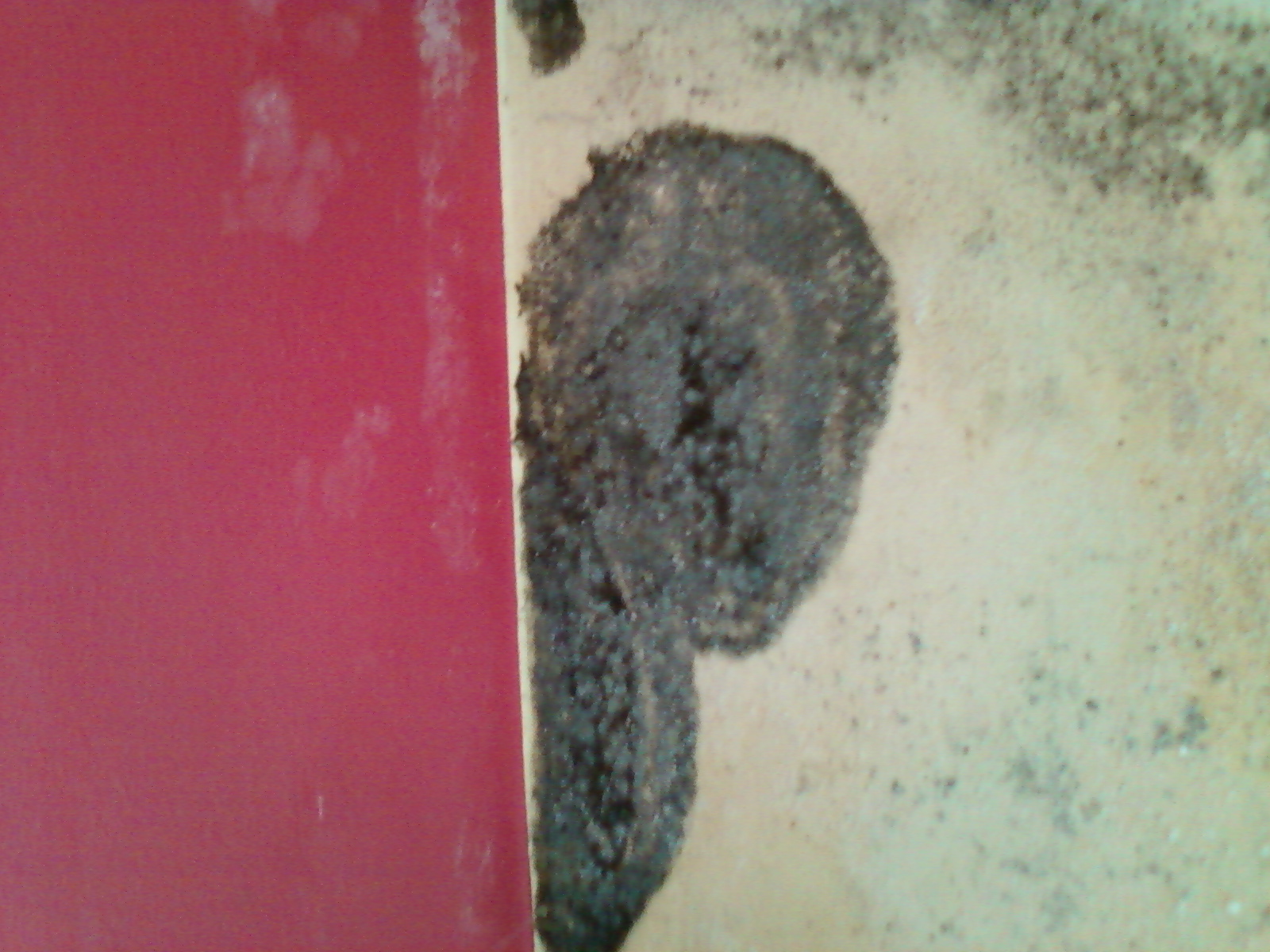 Mould contamination of the wall