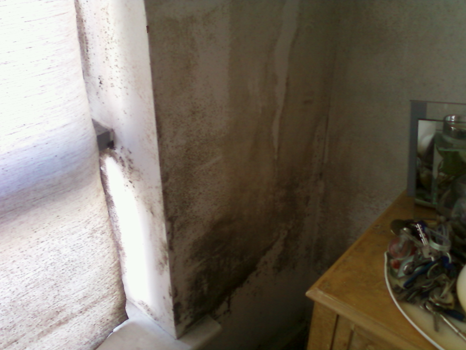 Mould infected apartment