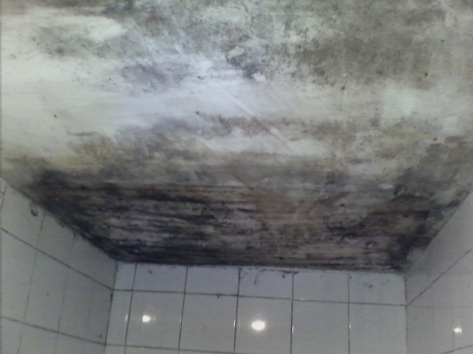 mould infected ceiling