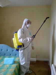 mould busters ireland