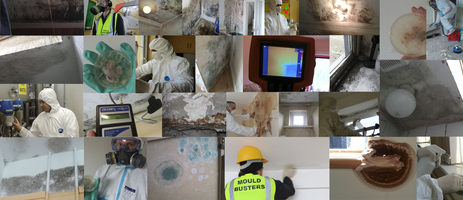mould-busters-ireland-removal-testing