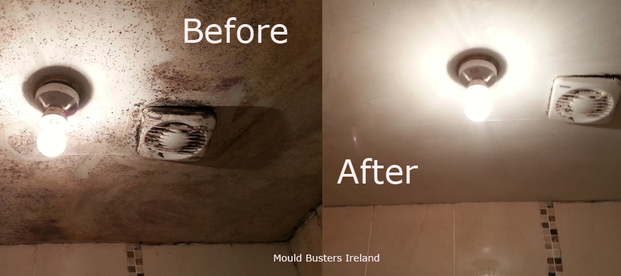toxic-back-mould-ceiling-bathroom