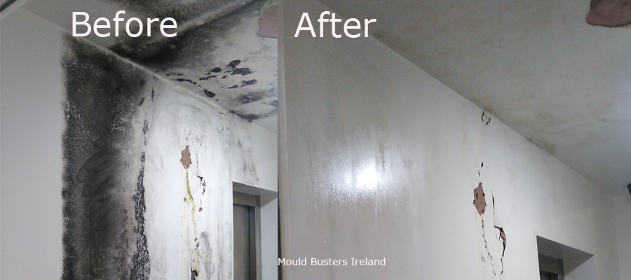 mould-removal-in-offices-dublin